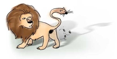 Cabeza de ratón o cola de león